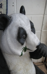 Panda Eating (JR 110040)	 - Thumbnail 03