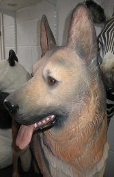 German Shepherd Dog (JR 110104) - Thumbnail 03