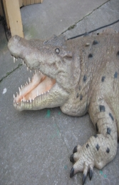 Crocodile - Mouth Open 12ft (JR 110091)	 - Thumbnail 03