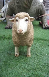 Merino Sheep head up - Small (JR 110126) - Thumbnail 02