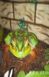 Green and Golden Bell Frog - Giant (JR 100017) - Thumbnail 01