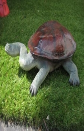 Long Neck Turtle (JR 100114)