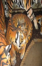 Bengal Tigress lying with Cub (JR 120011) - Thumbnail 03