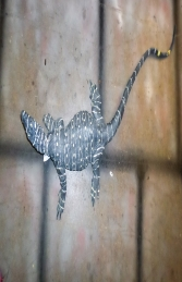 Lace Monitor Lizard 4ft (JR 080113) - Thumbnail 01