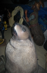 Male Fur Seal (JR 100093) - Thumbnail 02