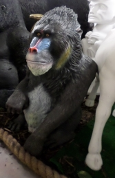 Mandrill Sitting (JR 140094) - Thumbnail 03