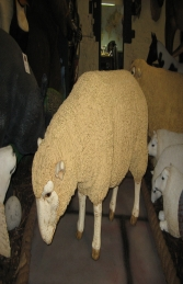 Merino Sheep Head Down Esky (JR 020409esky) - Thumbnail 02