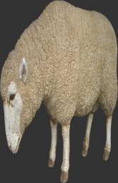 Merino Sheep Head Down (JR 020409) - Thumbnail 01