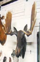 Moose Head (JR 180023) - Thumbnail 03