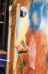 Parrot - Blue/Yellow (JR 170015by) - Thumbnail 03
