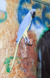 Parrot - Blue/Yellow (JR 170015by) - Thumbnail 02