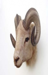 Mountain Ram Head (Furry) (JR 2109)