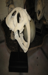 Saber Toothed Tiger Skull on base (JR 100501RS)