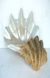 Sea Shell large (JR 1784) - Thumbnail 02