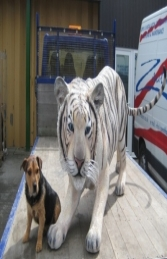 Bengal Tiger White (JR 100016)		 - Thumbnail 01