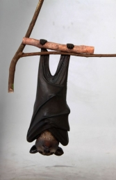 Bat - Spectacled Flying Fox (JR 100119) - Thumbnail 01