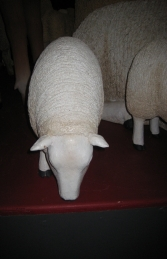 Texelaar Sheep head down - Small (JR 120022) - Thumbnail 03