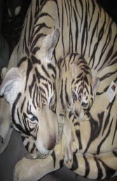 Bengal Tigress with Cub - Siberian White (JR 120011w) - Thumbnail 03