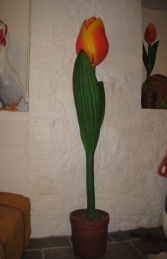 Tulip Whole 6ft (JR 1725)