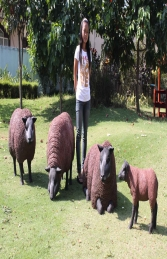 Texelaar Sheep Brown Flock (JR Flockb)