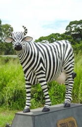 Zebra Cow life-size (JR 7011)