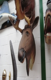 Moose Head Large (JR 2660) - Thumbnail 02