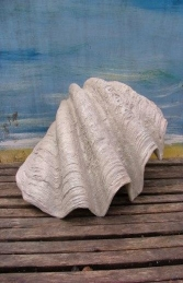 Sea Shell Small (JR 1783) - Thumbnail 01