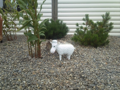CARRUAN FARM - LITTLE LAMB