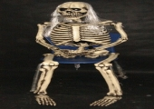 SKELETON SEATED  - LIFESIZE -