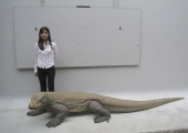KOMODO DRAGON 11FT LONG !